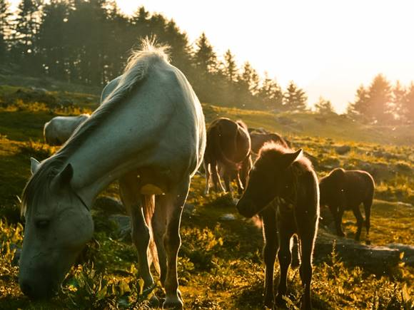 new forest pony stock photo.jpg